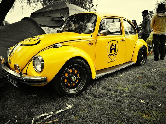 Wolkswagen  Wolkswagen Beetle Yellow Car Antique Antique Car Nostalgia Turkey Türkiye Adana Festival First Eyeem Photo