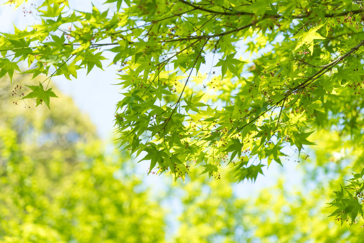 Beauty In Nature Branch Close-up Day Environment Freshness Green Color Growth Leaf Low Angle View Nature No People Outdoors Plant Tree