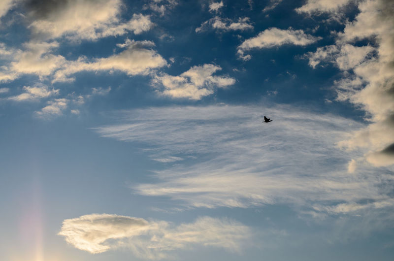 Atmosphere Bird Clouds Clouds And Sky Distant Light Sun Tranquility