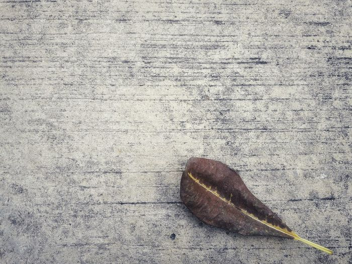 dry brown leaves on cement floor in autumn Space For Text Background Texture Plumeria Leaves Tropical Vintage Tone Autumn Fall Leaves Brown Leaves Dry Leaf Cement Floor High Angle View Close-up