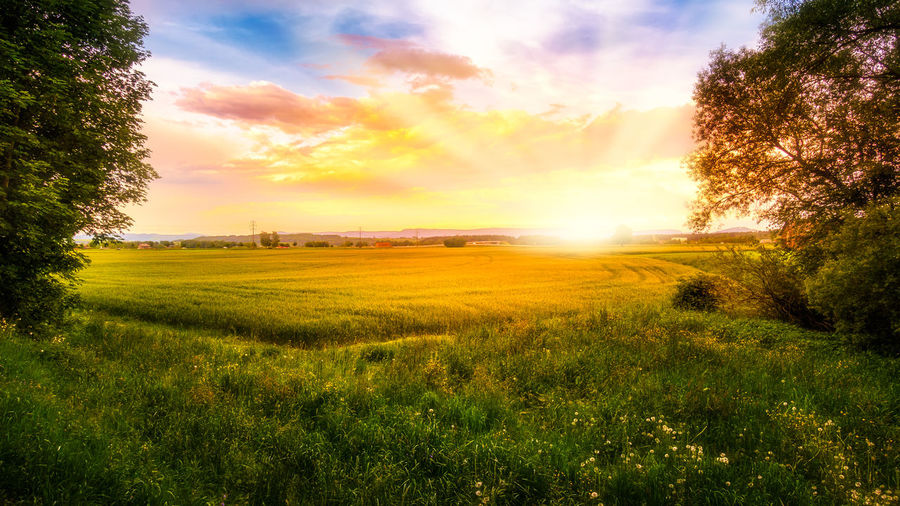 Agriculture Beauty In Nature Cloud - Sky Environment Field Grass Growth Land Landscape Lens Flare Nature No People Outdoors Plant Rural Scene Scenics - Nature Sky Sun Sunlight Sunset Tranquil Scene Tranquility Tree
