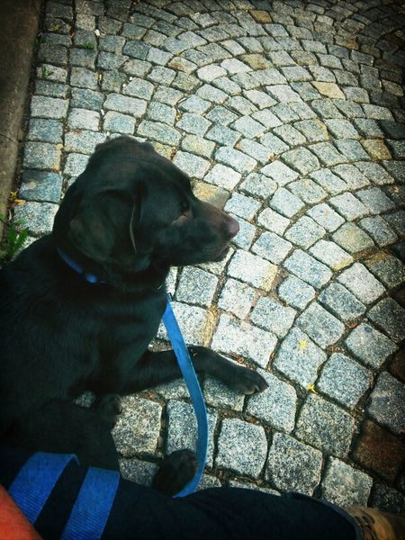 Hanging Out Hund Liebe Sus