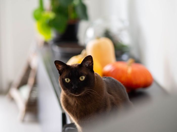 Portrait of cat at home