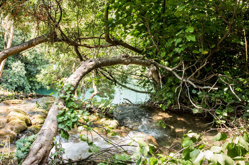 Branch Croatia Day Forest Growth Krka Krka National Park Landscape Natural Parkland Nature No People Outdoors Photography Tree Water Waterfall