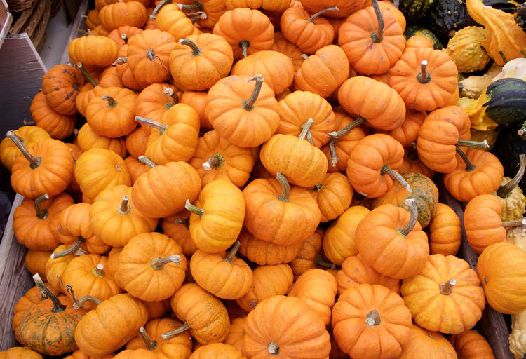 Food And Drink Food Large Group Of Objects Pumpkin Orange Color Retail  No People Market Stall Outdoors Market Autumn Freshness