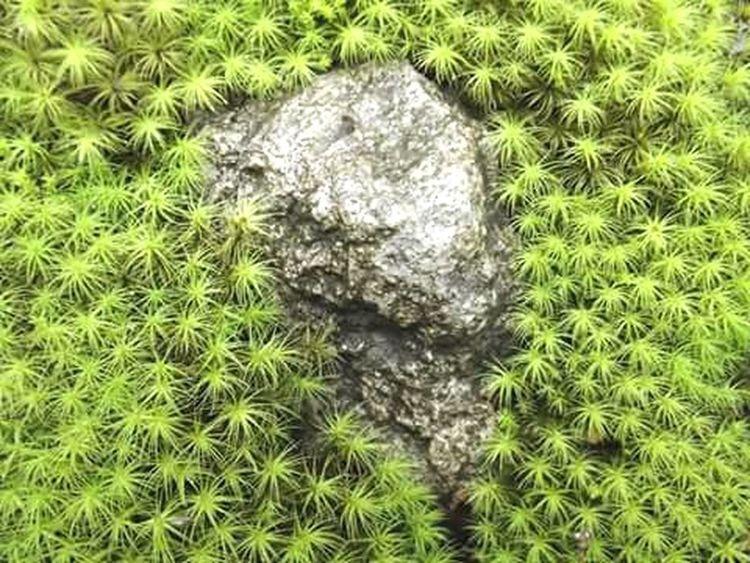Moho Macro_captures Green Color Nature Moho Close-up