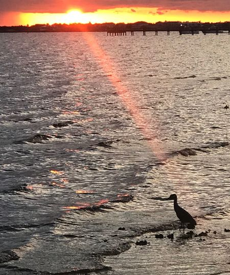 Water Sunset Nature Animal Beauty In Nature Sky Sea Animal Themes Animal Wildlife Vertebrate Scenics - Nature No People Animals In The Wild Orange Color Bird Land Outdoors Reflection