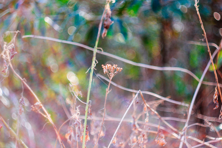 Plant Growth Day No People Fragility Close-up Nature Beauty In Nature Flower Selective Focus Vulnerability  Animals In The Wild Animal Wildlife One Animal Focus On Foreground Freshness Flowering Plant Animal Animal Themes Invertebrate Outdoors