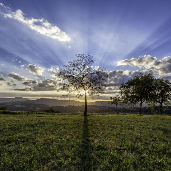 End of the day in a field in france. A nice sunset! Beauty In Nature Branch Cloud - Sky Day Field Grass Landscape Light Lightening Nature Shadow Sky Sunset Sunset_collection Tranquility Tree Tree