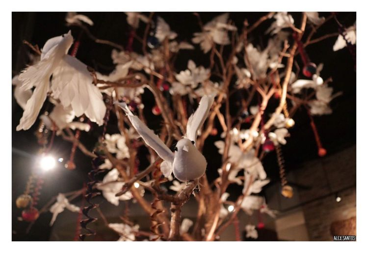 White Color Tree Of Life Beauty In Nature Birds Burds Doves Dove White Focus Beauty Trees Tree Close-up No People Celebration Hanging Focus On Foreground Outdoors Flower Christmas Decoration Day Nature