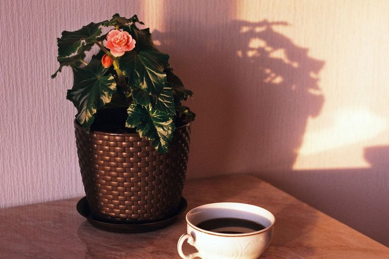 Close-up of flower vase ang coffee on table at home