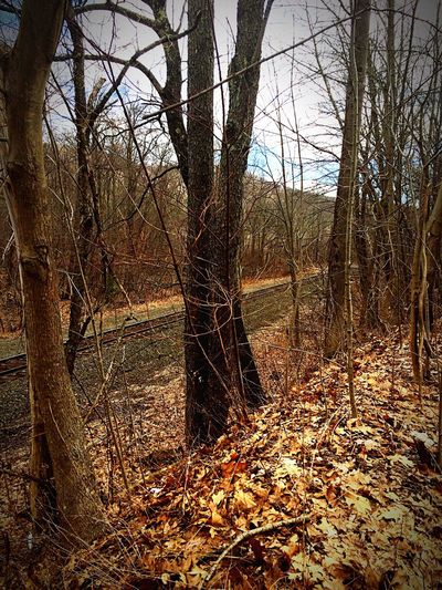 Spring in New England Nature Tranquility Forest Outdoors Tree Area Chester Massachusetts