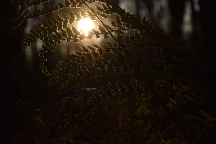 Beauty In Nature Birken Close-up Fern Forest Fragility Growth Hain Nature No People Outdoors Sunset Tranquility