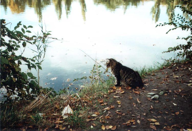 35mm 35mm Film Animal Autumn Cat Cats Of EyeEm EyeEm Best Shots EyeEm Nature Lover Film Fisherman Funny Lake Mju2 Mjuii Nature Olympus Outdoors Pets Reflection Water Zoology