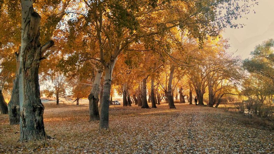 Tree Politics And Government Rural Scene Tree Trunk Autumn Sunlight Sky Landscape