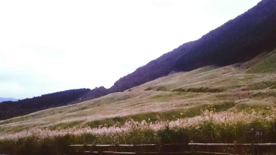 箱根 仙石原 すすき群生地 Road Grass Sky Nature Grassy Cloud - Sky Japanese Culture Trip Japan Photos Hakone Japanese Garden Japan Photography Hakone-JP Hakone Japan Trip Photo お出掛け Nature Japanese  Japan Silver Grass Field Silver Grass Japanese  Green Relaxing