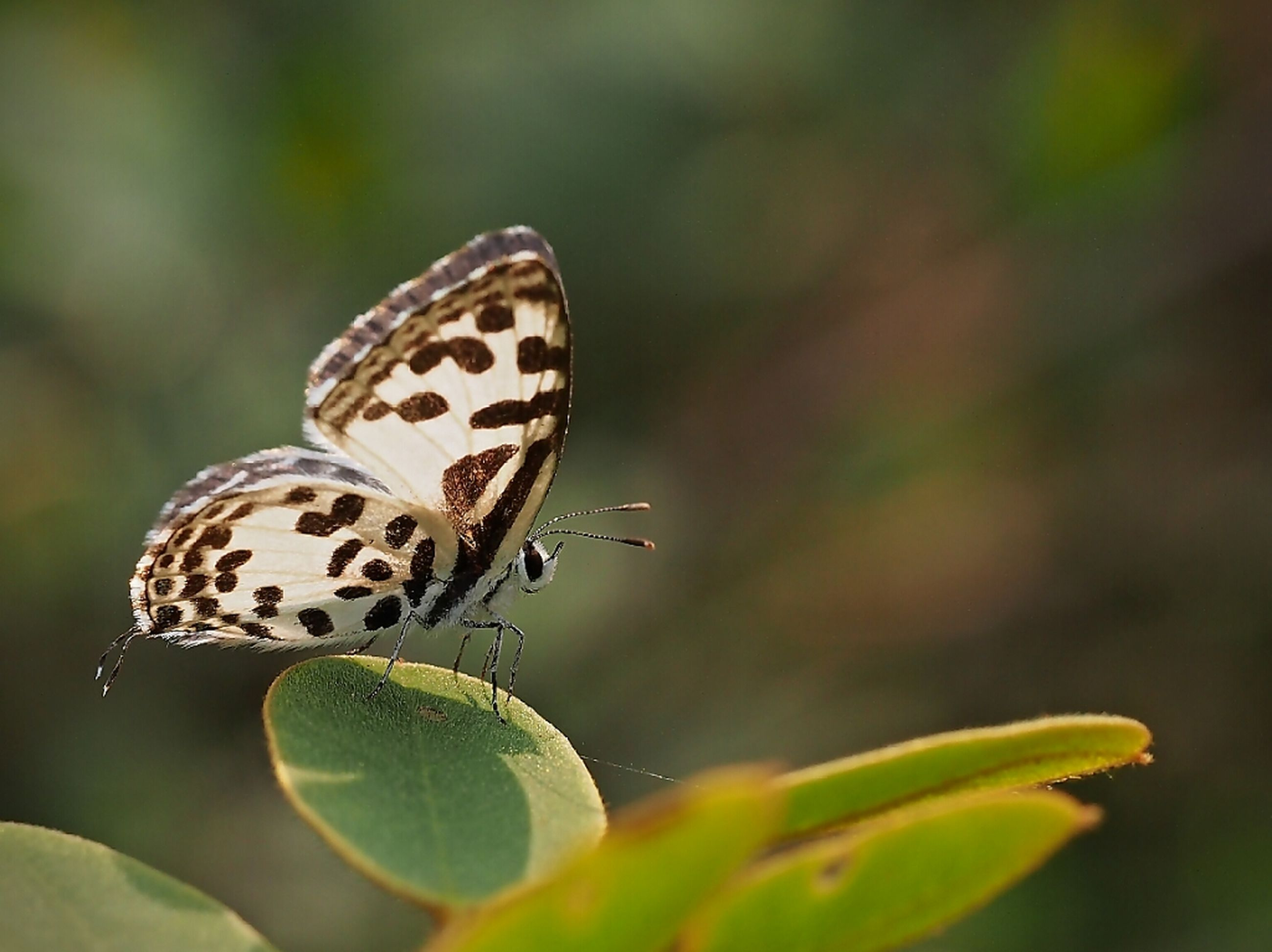 one animal, animal themes, animals in the wild, insect, wildlife, close-up, focus on foreground, animal markings, natural pattern, plant, nature, butterfly, selective focus, leaf, butterfly - insect, beauty in nature, green color, growth, day, outdoors