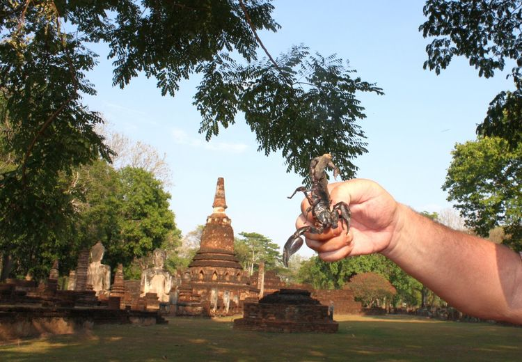 Cropped Hand Holding Scorpion Against Historic Temple