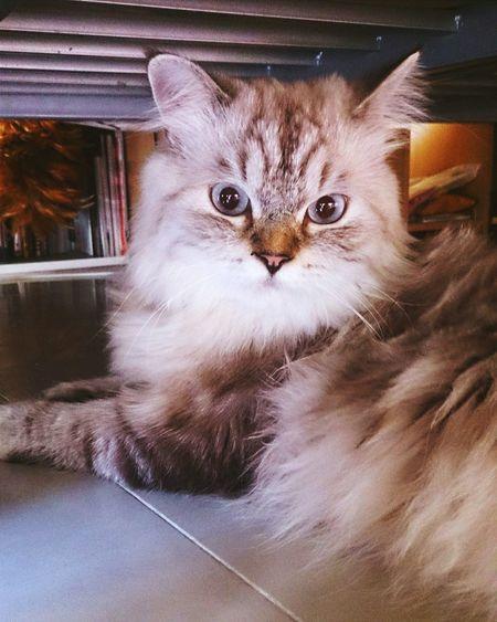 name fongnom My Cat♥ Mobilephoto Xperiaz