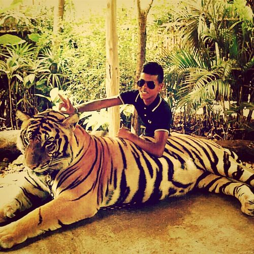 My little tiger Notengotiempo