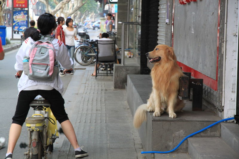 Photos from years ago. Commuter Passerby Shophouse Sidewalk Street Life Bicycle Bike Canine City Dog Looking Mammal One Animal Onlooker Pets Real People Street Photography Street Shop Streetphotography Women
