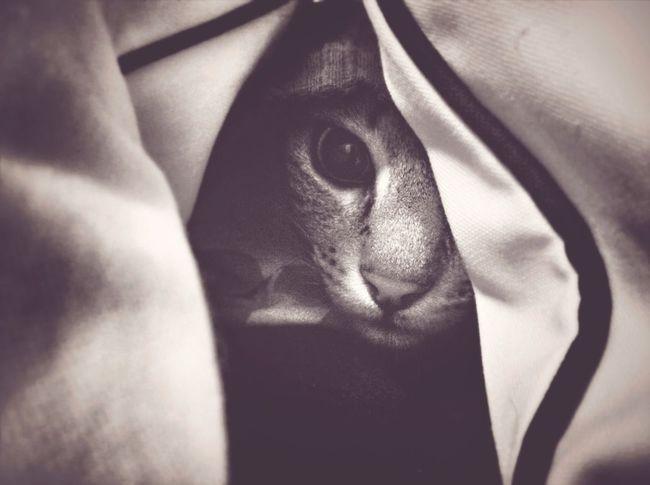 Blackandwhite Spy Cat Is Spying My Cat Hide And Seek