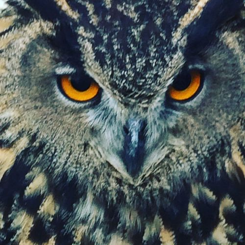 Close-up of owl against sky