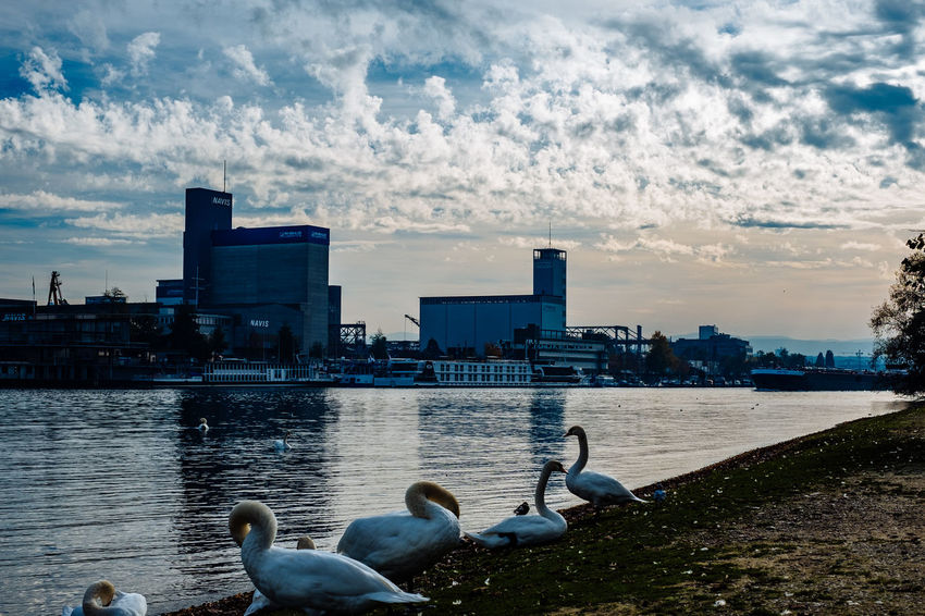 Animal Themes Animal Wildlife Animals In The Wild Architecture Autumn Bird Building Exterior Built Structure City City Life Cityscape Cloud - Sky Day Downtown District Dramatic Sky Nature No People Outdoors Sky Skyscraper Travel Destinations Urban Skyline Water