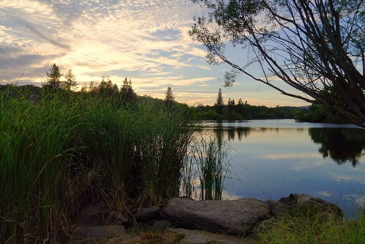 Sony Camera Sony A7 Tree Water Sunset Lake Reflection Sky Cloud - Sky Landscape Reflection Lake Reed - Grass Family Lakeshore