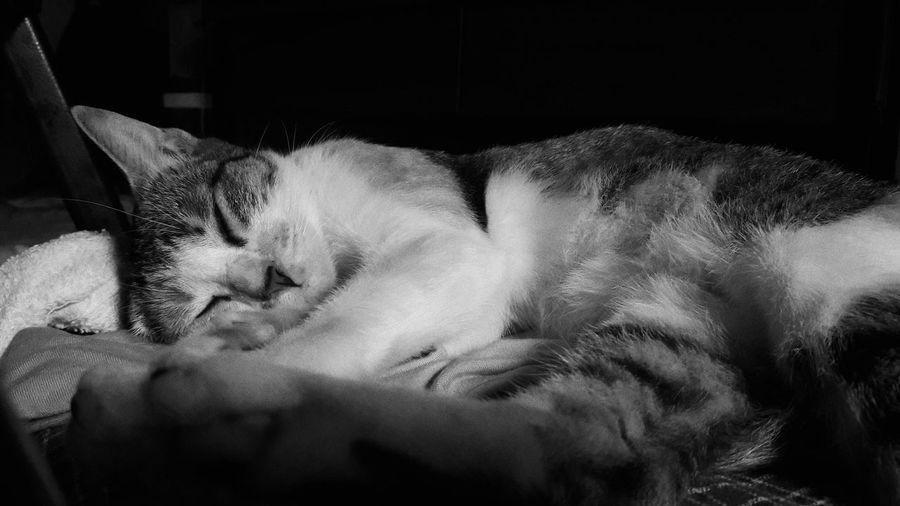 Sunday Snooze Cats Snooze Pet Photography  First Eyeem Photo