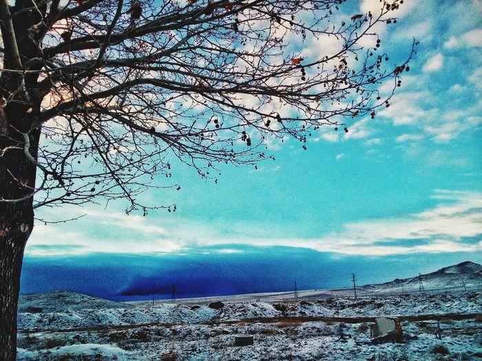 Winter Sky Tree IASBS
