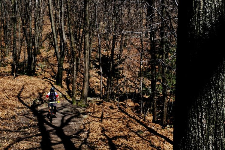 Back in the forest - of spring... is not much to see yet ... Hello World Jacklycat©2018 Bicycle Forest Getting Inspired Land Light And Shadow Mountainbike Ride Nature Plant Spring Streetphotography Tree Walking WoodLand