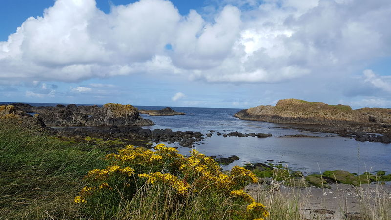 No People Flowers Yellow Flowers Cloud Sky Nothern Ireland  Beauty In Nature Ballintoy Water Sea Beach Sky Horizon Over Water Cloud - Sky Landscape Seascape Tranquil Scene Countryside Calm Scenics Idyllic Tranquility Non-urban Scene