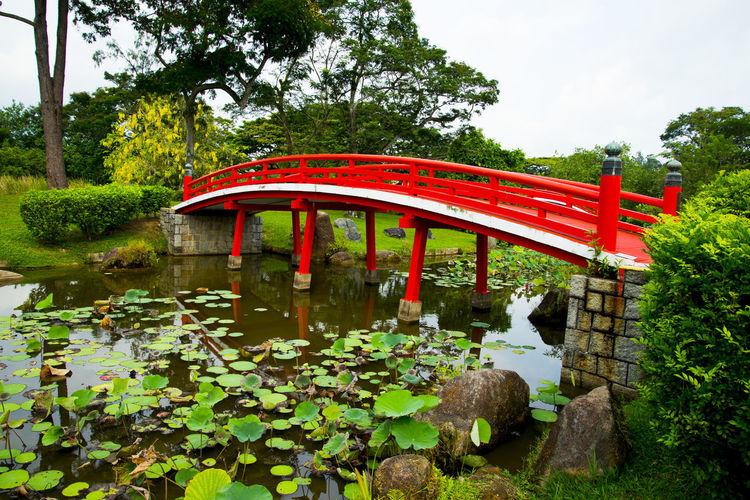 Japanese Garden Singapore City Japanese Garden Red Bridge Bridge
