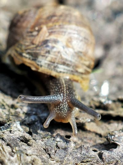 Kleine Schnecke.... Snail Natur Nature_perfection Nature Eyeemphotography Fotografia Fotografie EyeEmNewHere Garten Garden Macro Full Length Close-up Animal Themes