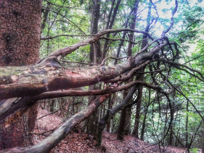 Looking for freedom Tree Brenches Awry Nature Nature_collection In The Forest Walking In The Woods Italy Showcase April Break The Mold
