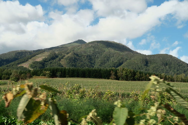 autumn niseko hokkaido japan 2018 In One Photograph It's About The Journey EyeEmNewHere Moments Of Happiness Capture Tomorrow Architecture Tree Grass Mountain Hokkaido Cloud And Sky Niseko Yotei Yotei Mt., Hokkaido Yotei Mt. Growth Landscape Plant Sky Beauty In Nature Environment Cloud - Sky Scenics - Nature Land Nature Tranquility Rural Scene Agriculture Field Green Color Tranquil Scene Day No People Crop  Outdoors Plantation