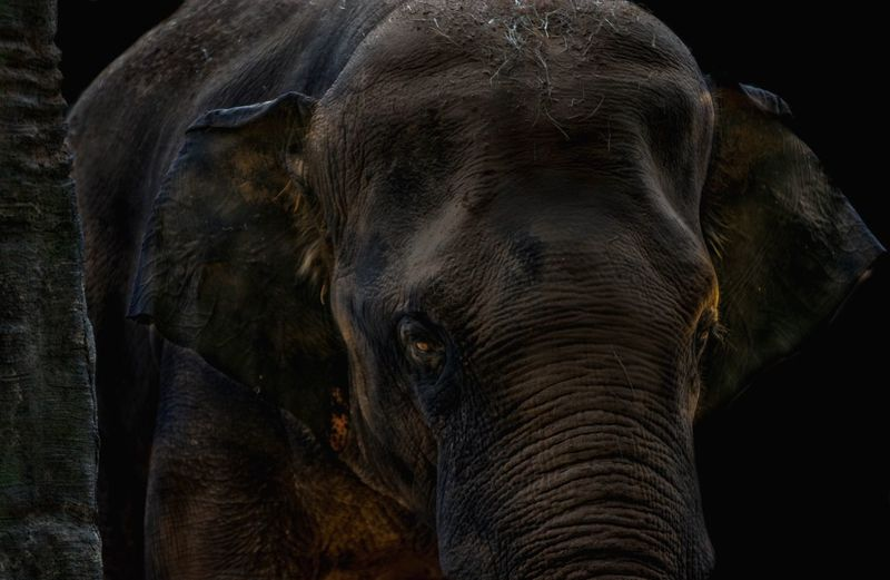 Fine art Photography Elephant Mammal Animal One Animal Animal Themes Animal Body Part Animal Wildlife Animals In The Wild No People Close-up Animal Head  Animal Trunk Portrait Wrinkled African Elephant Outdoors
