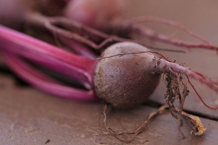 Close-up of common beet on table
