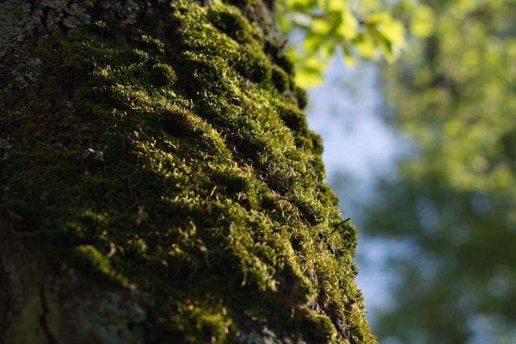 Tree Close-up Sky Plant Green Color Moss Fern Fungus Mushroom