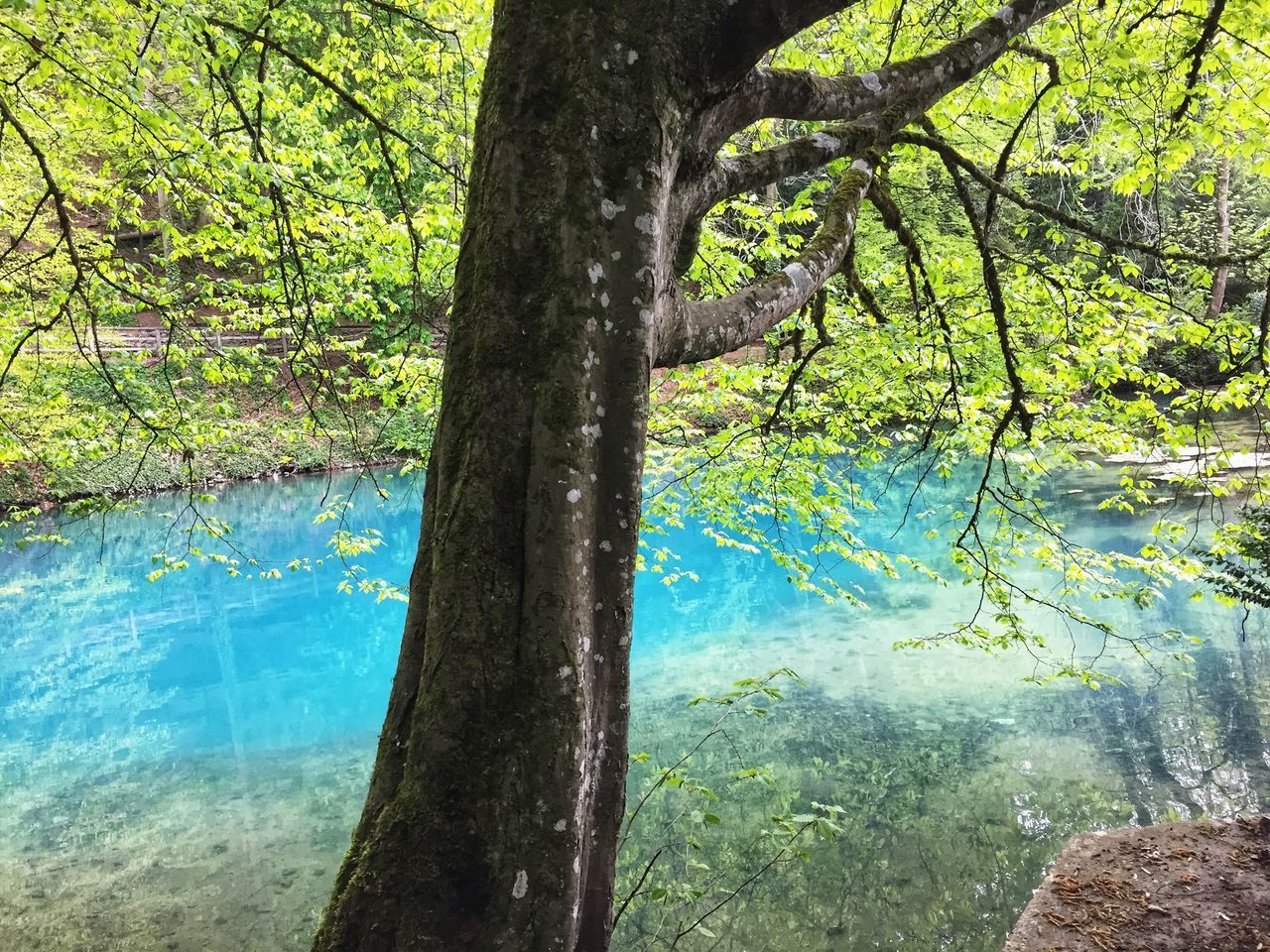 tree, plant, water, nature, trunk, tree trunk, day, tranquility, growth, beauty in nature, land, forest, branch, lake, no people, reflection, outdoors, scenics - nature, tranquil scene