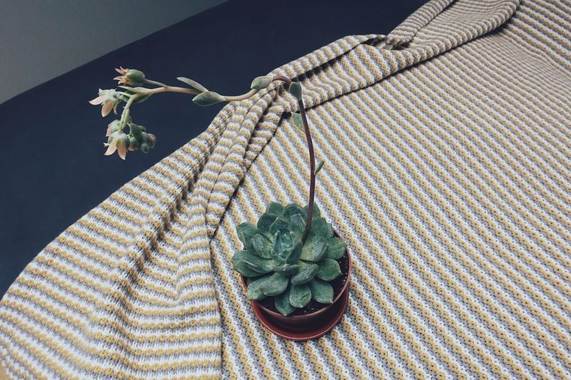High angle view of potted succulent plant on table