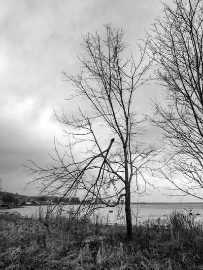 Chop Sticks Sverigebilder Sweden Sverige Bastad Nature Naturephotography Black And White Blackandwhite Sky Cloud - Sky Beauty In Nature Nature No People