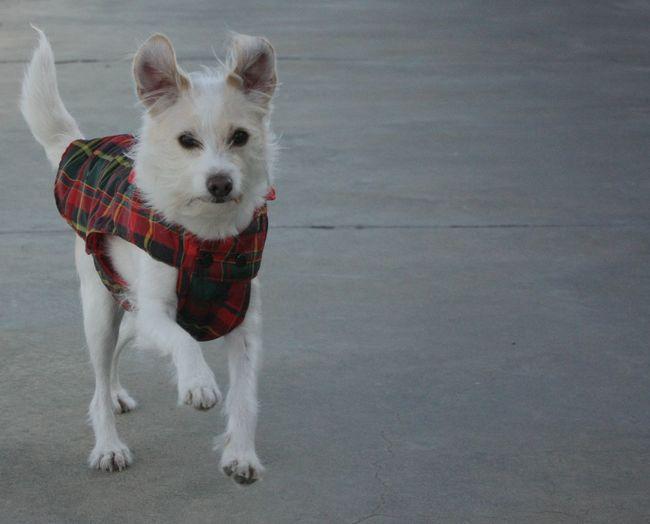 Dog Funny FUNNY ANIMALS One Animal Pet Animal Pets Run Running