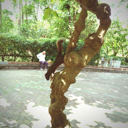 台湾旅行にて 台湾 台北 Taiwan Taipei 植物園 栗鼠 リス