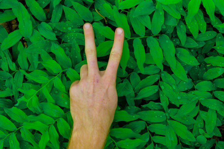 fresh green leaves pattern with hand showing different signs in the foreground Green Man Nature Palm Plant Sign Arm Background Detail Drop Flora Forest Fresh Giving Hand Leaf Leaves Male Nobody One Person Outdoors Outside Pattern People Showing