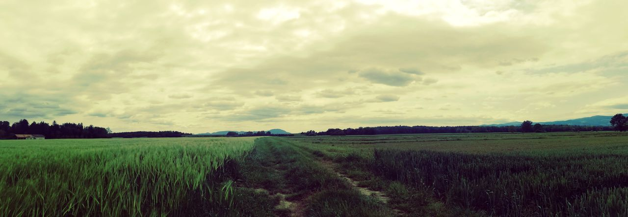 Agriculture Field Freshness Scenics Tranquil Scene Nature Rural Scene Landscape Farm Nature_collection EyeEm Nature Lover EyeEm Landscape Cloud - Sky Panoramic Dramatic Sky Field Growth Nature Eyeemphotography Eyeem Collection EyeEmNewHere EyeEm Gallery Exceptional Photographs Check This Out Growing The Great Outdoors - 2017 EyeEm Awards The Photojournalist - 2017 EyeEm Awards Out Of The Box Breathing Space Lost In The Landscape