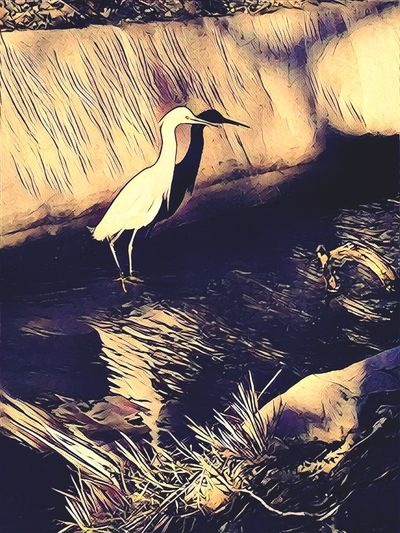 """""""Shadow and Reflection"""" Photoart enhancement of a white crane hunting food in a local park captures its shadow on a canal wall and reflection in the water. Bird Animals In The Wild Nature Crane White Crane Reflection Reflections In The Water Shadow Photoart"""