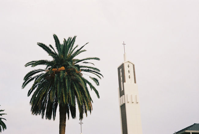 35mm Film Adapted To The City Analogue Photography Architecture Building Exterior Built Structure Church Close-up Cross I Juxtaposition Low Angle View Nature Negative Spae No People Outdoors Palm Tree Sky Tall Tower Tree