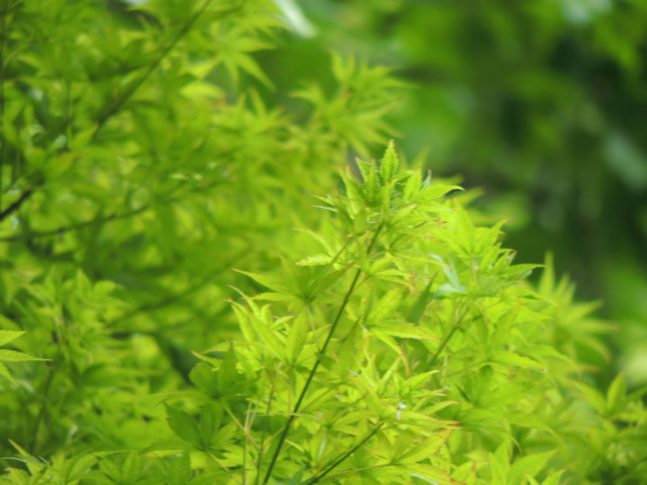 green color, growth, nature, plant, green, leaf, beauty in nature, close-up, focus on foreground, outdoors, day, no people, freshness